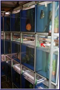Foto Zuchtanlage - Wasserwechselstutzen